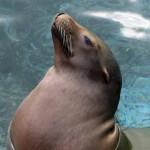 Los leones marinos virtuales ayudan a la rehabilitación de pacientes con daño cerebral
