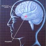 Amígdala eo córtex pré-frontal