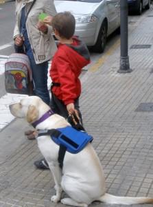 Trabajando los semáforos con Guinness. Foto: Miguel Ángel Signes Llopis